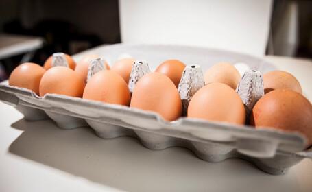 Scandalul ouălor contaminate cu Fipronil. Autoritățile române susțin că marfa contaminată nu a ajuns în comerţ
