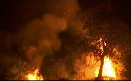 1.600 de pompieri luptă cu incendiile de vegetație în Portugalia