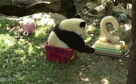 Petrecere la o grădină zoologică pentru un panda. Bei Bei a împlinit 2 ani