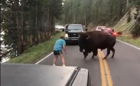 Bărbat filmat în timp ce provoca un bizon în Parcul Yellowstone. VIDEO