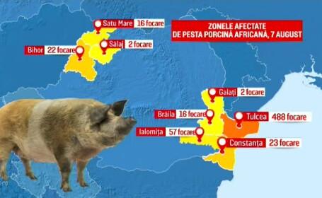 zonele afectate de pesta porcina