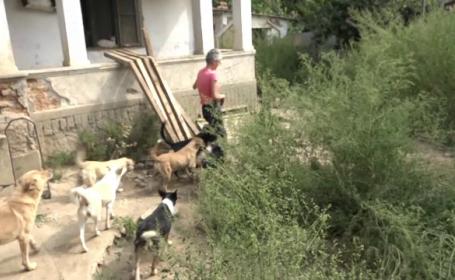 """80 de câini şi 60 de pisici, într-o curte din Buzău. Vecinii sunt disperați: """"Mizerie, fecale, hoituri"""""""