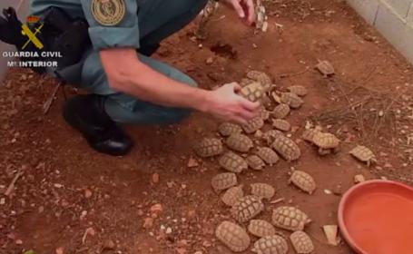 Peste 1000 de țestoase au fost confiscate de polițiști. Ce au descoperit oamenii legii