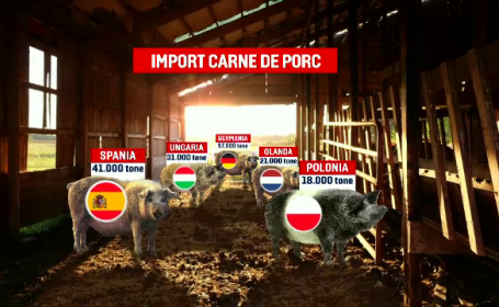 Virusul pestei porcine afectează grav și industria cărnii. De frică, procesatorii aduc carne din afară