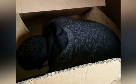 Somalezi şi irakieni, găsiţi de poliţie în cutii de carton. Unde voiau să ajungă