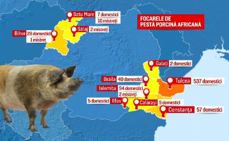 Măsurile luate de vecinii bulgari pentru a împiedica răspândirea pestei porcine și la ei