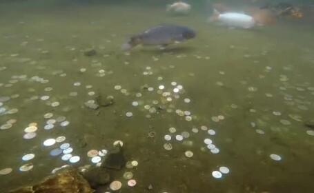 Delfinariul din Constanța și Peştera Urşilor, afectate de monedele aruncate de turiști