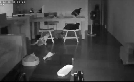 Reacția unor pisici care au simțit, cu câteva secunde înainte, producerea unui seism