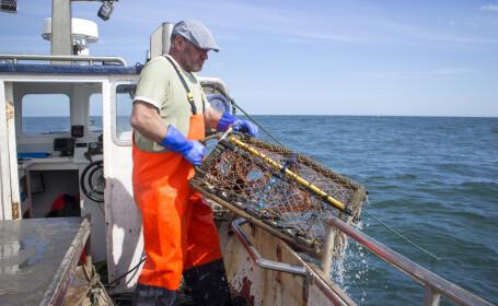 Homar rar, în culorile curcubeului, prins de două ori de același pescar. Ce va face cu el