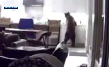 Un urs a intrat peste doi tineri în casă și a început să le golească frigiderul