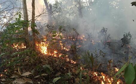 Amazon, Brazilia, incendiu