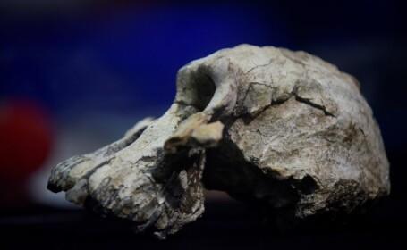 Craniu vechi de 3,8 milioane de ani, găsit în Etiopia