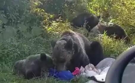 Clipe de groază pentru un grup de tineri veniți la picnic pe Transfăgărașan. S-au trezit încolțiți de urși