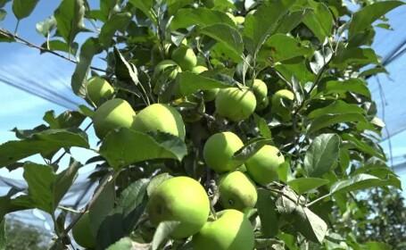 Fructele românești își fac cu greu loc pe rafturile magazinelor, care sunt pline de produse de import