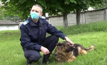 Poliția Animalelor va fi înființată în România. Polițiștii vor putea interveni la domiciliu