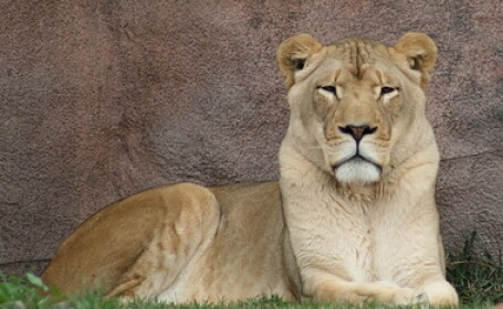 Leoiaca Bella, de la Zoo Buhusi, operata din nou!