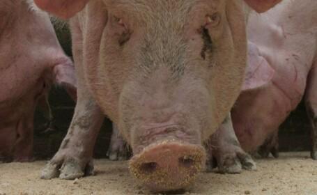 Sta la bloc, dar are un porc si 43 de gaini. Solutia unui roman ca sa manance sanatos si ieftin