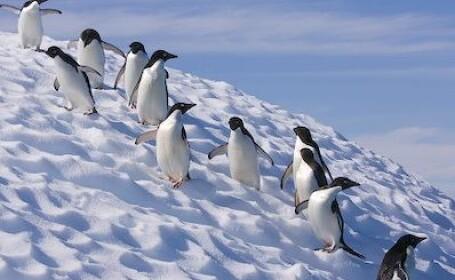 Polul Sud