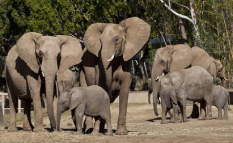 Gest emotionant al unui elefant pentru un bebelus pe care era sa-l omoare din greseala