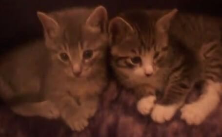 Pisici omorate