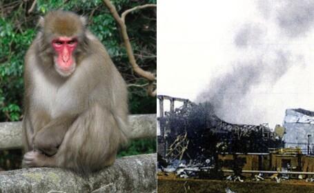 maimute Fukushima