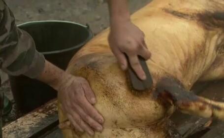 Cinci timiseni au ajuns la spital dupa ce au mancat de Craciun, carne infestata cu trichineloza