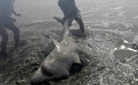 Momentul uimitor in care un soldat american a prins un rechin \