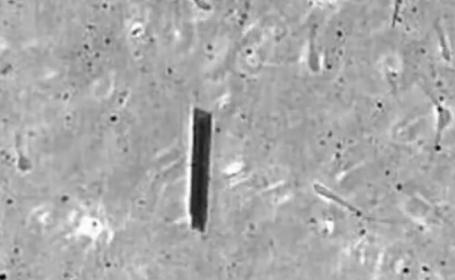 Spermatozoizi controlati de la distanta. Ei vor putea livra medicamente oriunde in organism