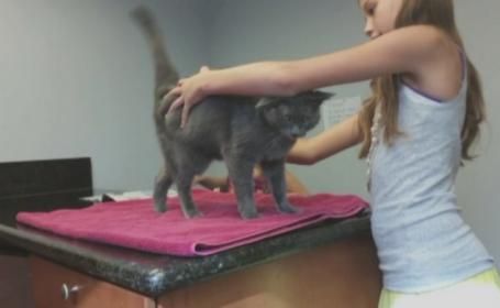 Pisica din SUA care a supravietuit o luna intr-o cutie de bagaje. Povestea incredibila a felinei