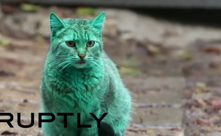 pisica verde Varna