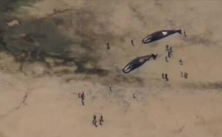 Imaginea terifianta a 7 balene esuate pe o plaja din Australia. Localnicii spun ca nu au mai vazut asa ceva