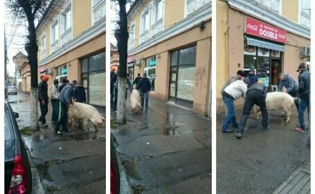 Cu porcul prin mijlocul Clujului. Imaginile care definesc atmosfera romaneasca de Craciun