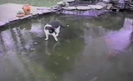 Cum reactioneaza o pisica atunci cand nu reuseste sa prinda pestii care inoata pe sub gheata - VIDEO