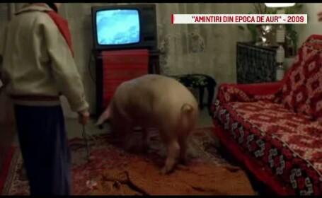 film porc