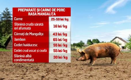 porc mangalita
