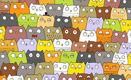 Al doilea puzzle care iti pune la incercare rabdarea. Poti sa vezi motanul ascuns printre bufnite?