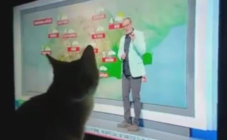pisica busu