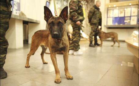 Rusia s-a dotat cu caini politisti clonati si vrea sa obtina, prin aceeasi metoda, si mamuti. Cat costa procedeul