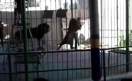accident la circ