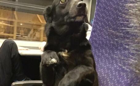 Cainele care se crede om si s-a asezat in fund pe scaun, intr-un tren. Cine se afla langa el. FOTO