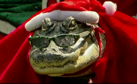 O americanca excentrica si-a luat un aligator drept animal de companie. Cum arata Rambo imbracat in haine de sezon