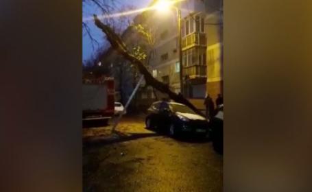Un copac de peste 20 de m înălțime, prăbușit peste o mașină, în Oradea