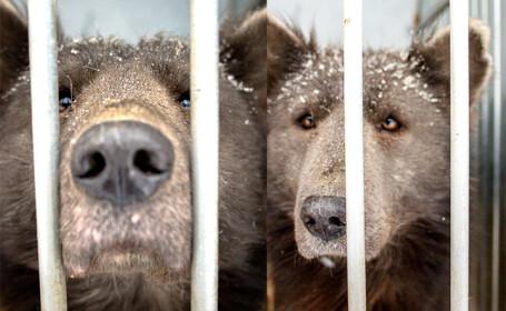 """Viral în Rusia. Lumea este confuză: """"Este un urs sau un câine?"""""""