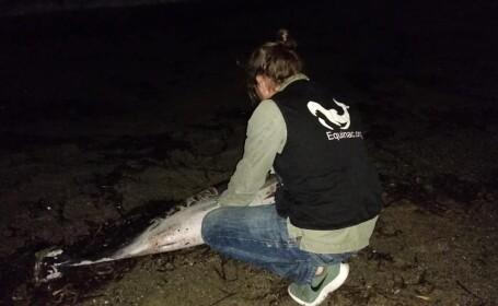 delfin torturat