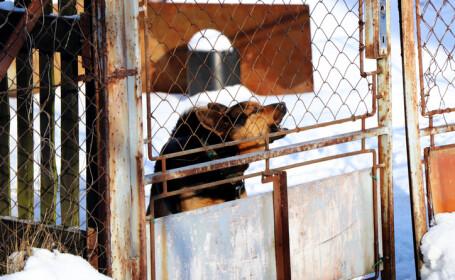 O familie din Timişoara a fost salvată de la moarte de câine, în noaptea de Crăciun