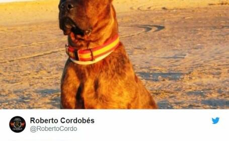 """""""Câine ucis pentru că a mușcat un hoț român."""" Mii de spanioli au distribuit povestea falsă"""