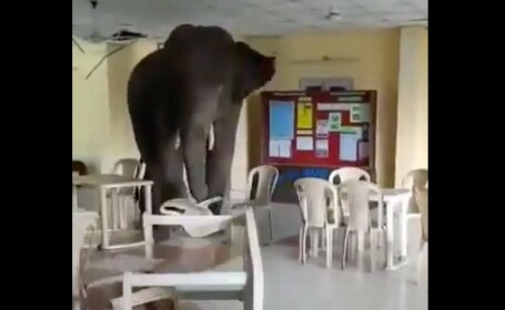 Un elefant a pătruns într-o clădire a armatei indiene și a distrus totul în cale. VIDEO
