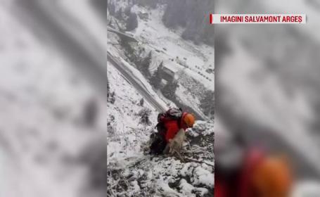 Intervenție inedită a salvamontiștilor din Argeș. Au salvat un câine blocat trei zile între stânci
