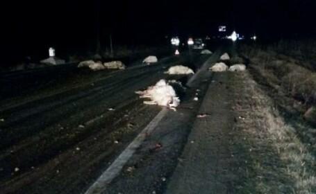 Un șofer a omorât cu mașina 30 de oi