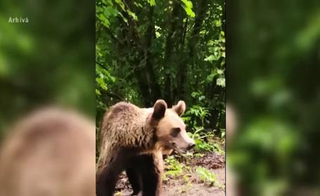 Alertă în Târgu Mureș. O ursoaică și puiul ei, la plimbare într-un loc de joacă pentru copii